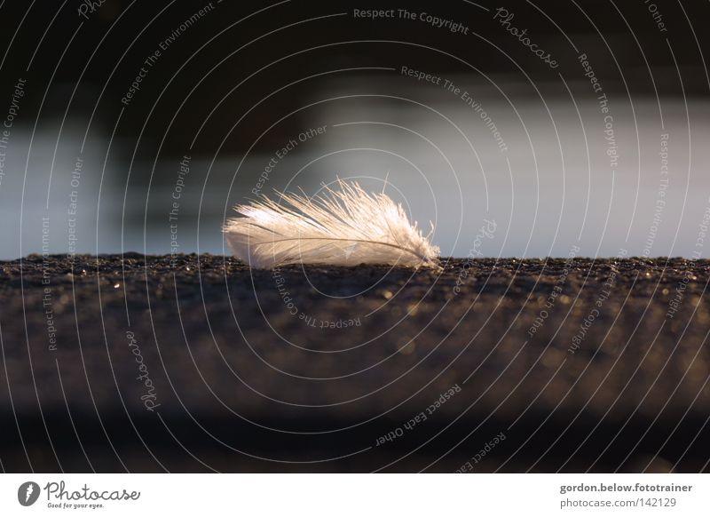ein Rest vom Engel Feder Daunen Wasser Steg Einsamkeit verloren ausfallen Sonnenstrahlen Gegenlicht