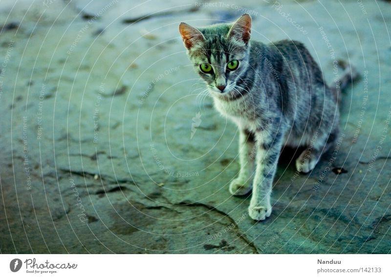 Reviergrenze schön Tier kalt Freiheit grau Stein Katze frei Macht Boden Bodenbelag dünn wild Wut Fell Wildtier