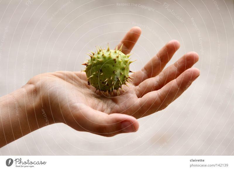 Massage-Ball Jugendliche Hand grün Herbst Spitze stachelig Behandlung Stachel stechen Kastanienbaum Kinderhand