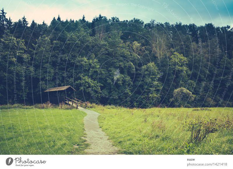 Das Schweigen vor dem Wald Erholung ruhig Kur Freizeit & Hobby Ausflug Landwirtschaft Forstwirtschaft Umwelt Natur Landschaft Pflanze Himmel Sommer Wiese Hütte