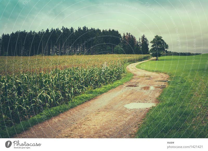 So ein Wetter ... Himmel Natur grün Baum Landschaft Einsamkeit Wald kalt Umwelt Herbst Wiese Wege & Pfade Regen Wetter Feld Freizeit & Hobby