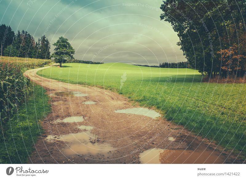 Einfach mal zu weit gehen ... Himmel Natur grün Baum Landschaft Einsamkeit Wald kalt Umwelt Herbst Wiese Wege & Pfade Regen Wetter Feld Freizeit & Hobby