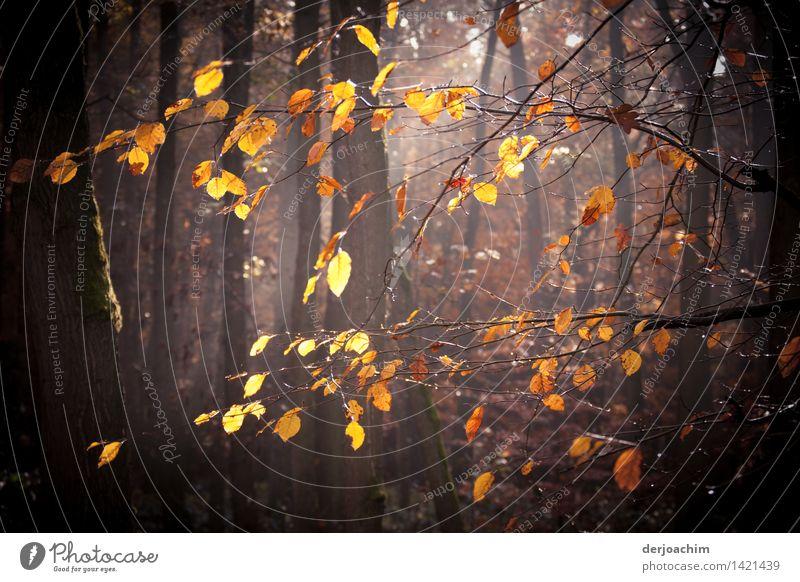 Herbstspaziergang,  ein paar Blätter  hängen noch im Sonnen durchfluteten Wald. Freude ruhig Freizeit & Hobby wandern Natur Schönes Wetter Baum Bayern