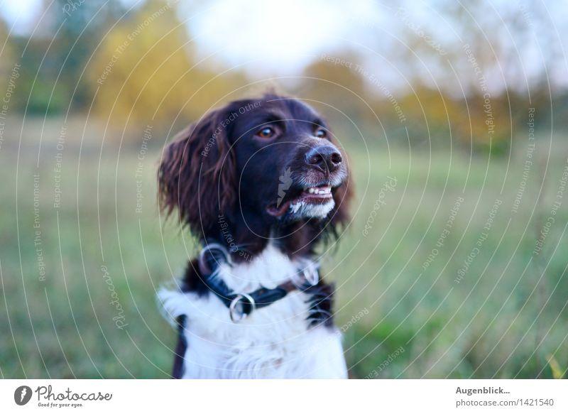 13... Freitag... Tier Haustier Hund wandern Freundlichkeit Neugier Wachsamkeit Gesellschaft (Soziologie) Farbfoto Außenaufnahme Dämmerung