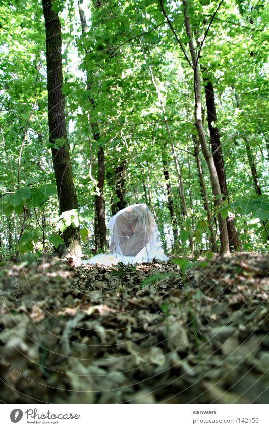 kokon Wald Baum Natur authentisch Naturliebe Blatt grün Sonne Sommer Physik Grüner Daumen Grüne Mauer Kokon Insekt Larve Ei Mensch Frau Leben Umweltschutz zart