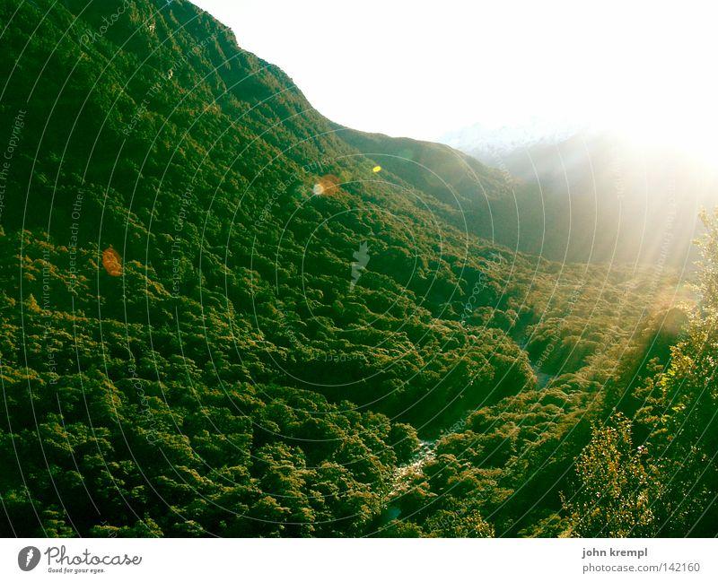 es werde licht! Anau Milford Sound Neuseeland Südinsel Urwald Wald grün Licht Sonne Morgen Sonnenaufgang Lampe Lichterscheinung Himmelskörper & Weltall