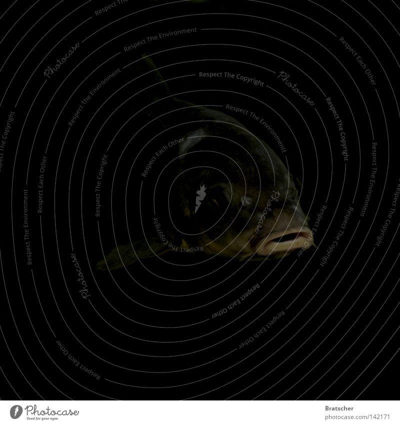 Spion - Reloaded dunkel gruselig Filmindustrie Mörder Intuition Wut Aggression drohen Tiefsee Angst Panik gefährlich Fisch Karpfen Mord Gewalt bedrohlich