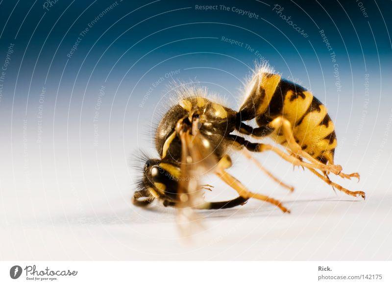 .Leblos 2 Natur ruhig Auge Leben Tod Gefühle Haare & Frisuren Bewegung Traurigkeit Beine Haut Rücken glänzend fliegen schlafen