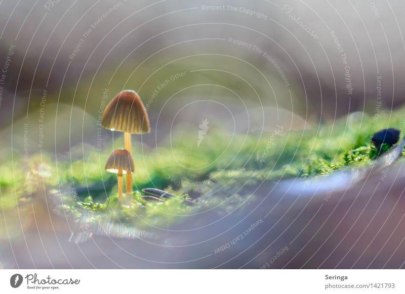 Paarlauf Ernährung Essen Umwelt Natur Landschaft Pflanze Erde Sonne Sonnenlicht Herbst Moos Garten Park Wiese Wald glänzend genießen Wachstum Gesundheit Pilz
