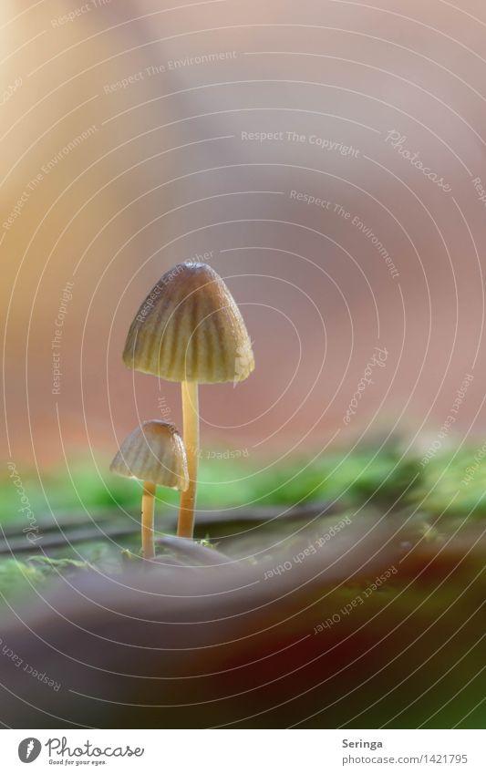 Noch mehr Pilze Lebensmittel Ernährung Natur Landschaft Pflanze Sonne Sonnenlicht Herbst Schönes Wetter Moos Garten Park Wiese Wald entdecken Essen glänzend