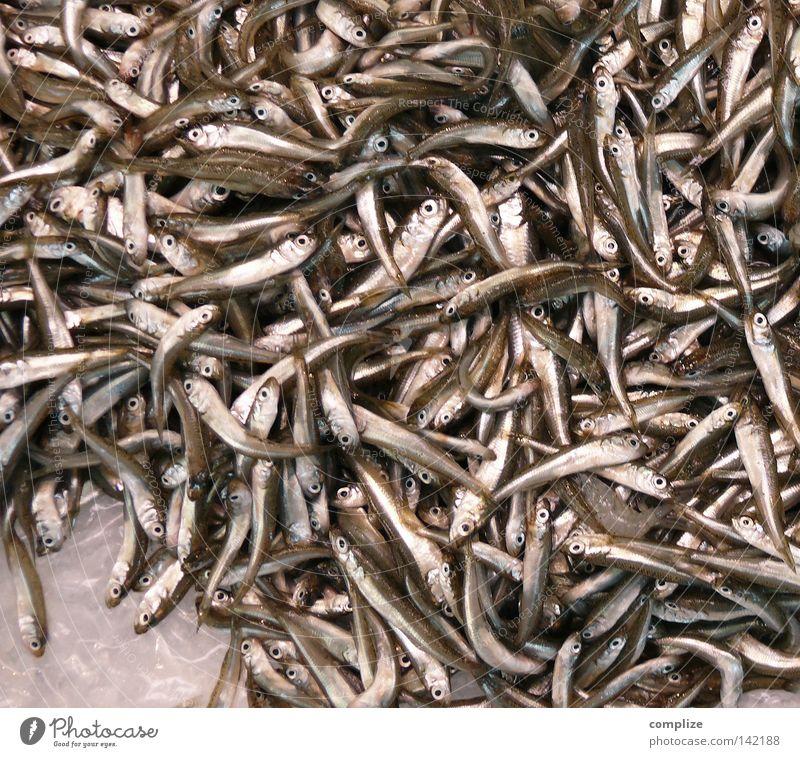 Sardinien Meer Tod Ernährung klein mehrere Fisch viele Kochen & Garen & Backen Küche Gastronomie Restaurant Angeln Markt Fischereiwirtschaft Scheune Fischauge