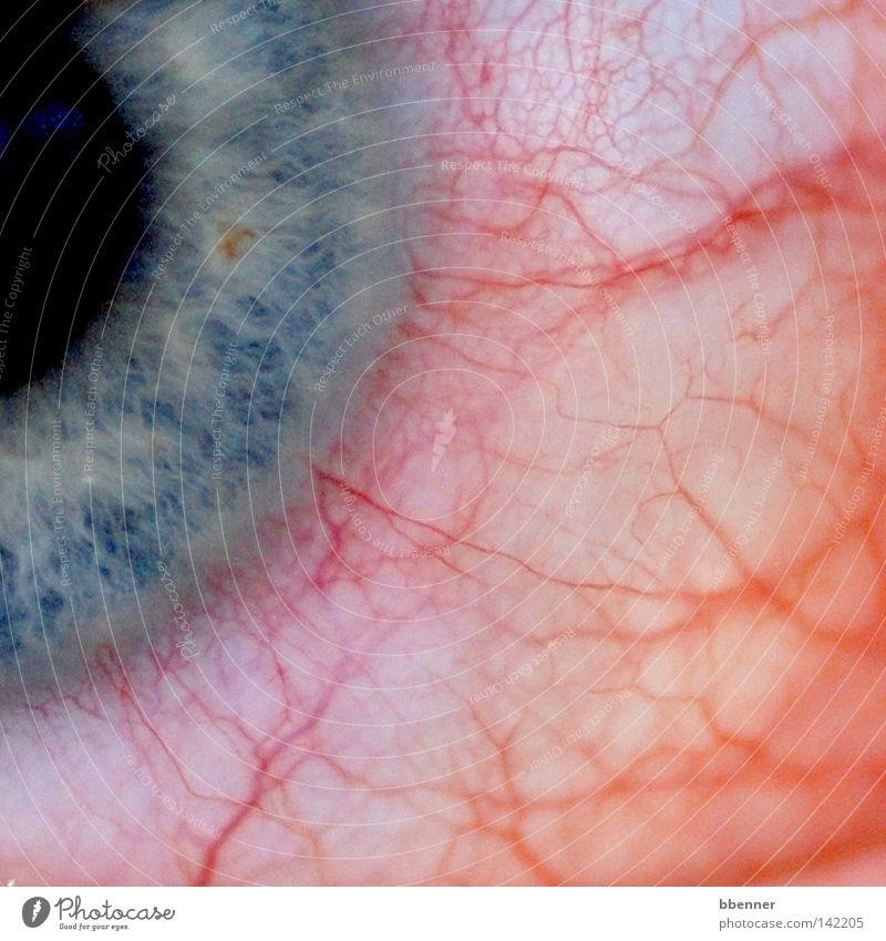Juckreiz weiß blau rot schwarz Auge Gesundheitswesen Schmerz Gefäße Allergie Regenbogenhaut nerven unbequem Störung Juckreiz Äderchen