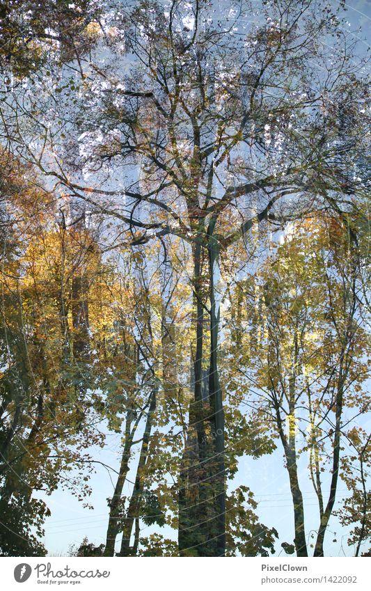 Herbst Wellness harmonisch Ausflug wandern Natur Landschaft Baum Blatt Park Wald Urwald Ferien & Urlaub & Reisen Wachstum natürlich schön mehrfarbig Stimmung
