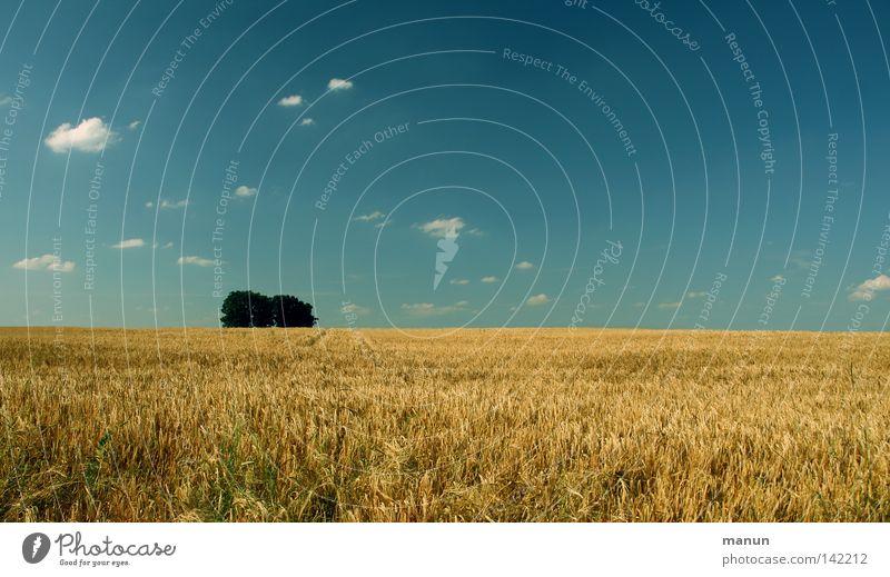 Sommer-Feld Himmel Natur blau grün weiß Baum ruhig Landschaft Wolken gelb Wärme Gesundheit Horizont Luft