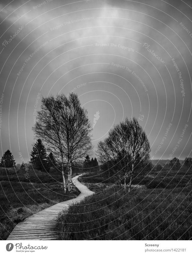 In die Ferne Himmel Natur Ferien & Urlaub & Reisen Pflanze Baum Landschaft Wolken ruhig Herbst Gras Wege & Pfade Wetter Tourismus Idylle wandern Sträucher