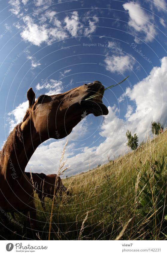 Erzählung. Himmel Freude Wolken Tier Wiese träumen Feld Nase Pferd Lippen Gebiss Weide Ackerbau Säugetier Haustier Weide