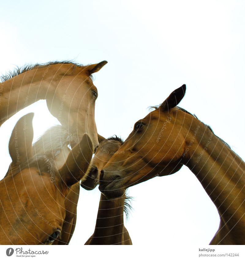 ferrari Pferd Tier Nüstern Pferdegebiss Schnauze Feld Wiese Fischauge Ackerbau Wolken Zugtier Haustier träumen Zwerg Klischee Wunschtraum Fressen Grünpflanze