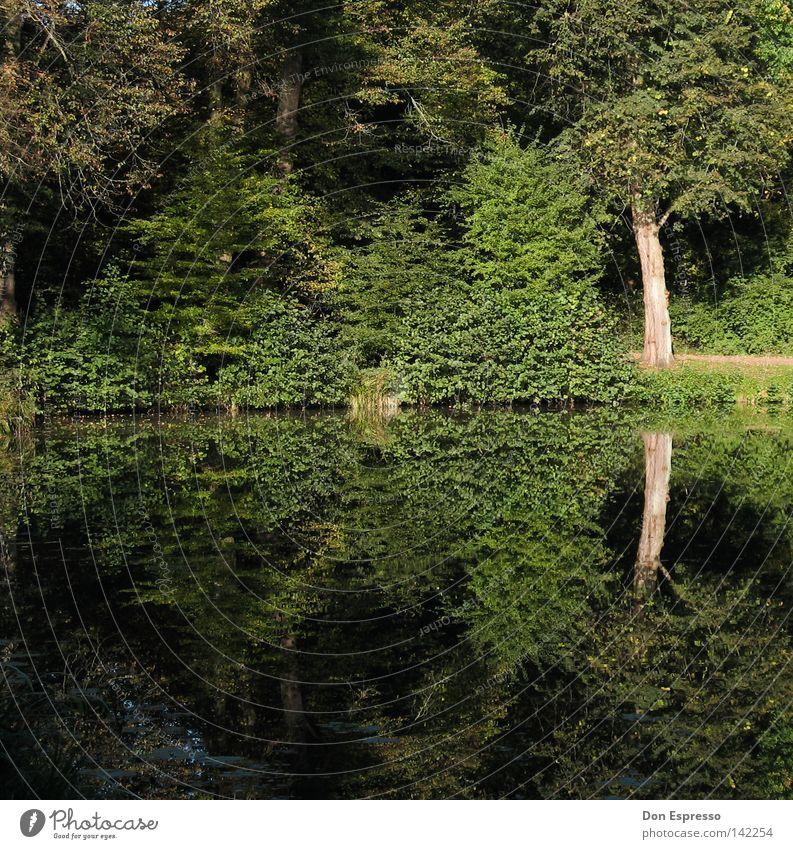 A Walk In The Park Wald Baum Sträucher grün Idylle See Teich Wasser Reflexion & Spiegelung Moos Gras Wiese Baumstamm Blatt Wege & Pfade Spaziergang Joggen