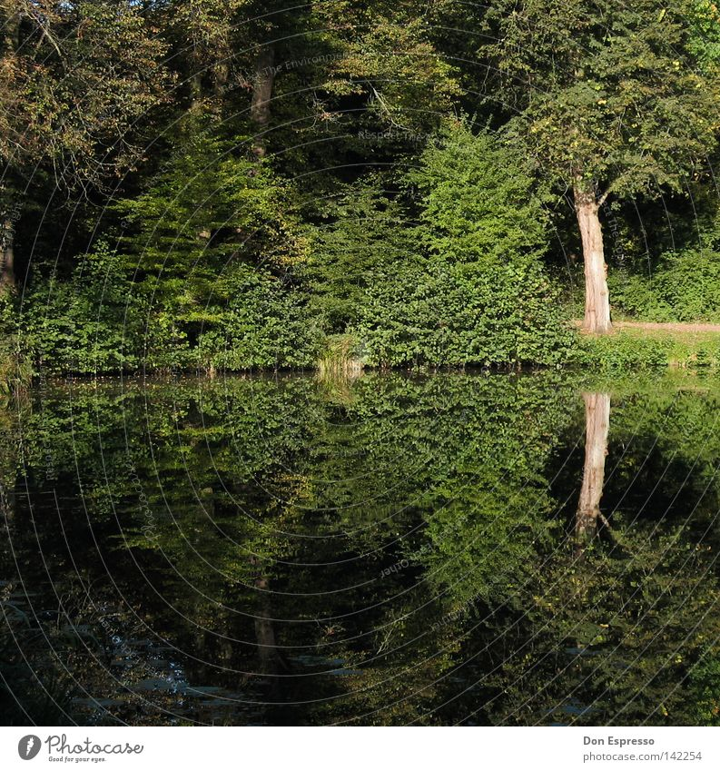 A Walk In The Park Wasser Baum grün Sommer Blatt Wald Wiese Gras Frühling Wege & Pfade See Sträucher Spaziergang Idylle Baumstamm