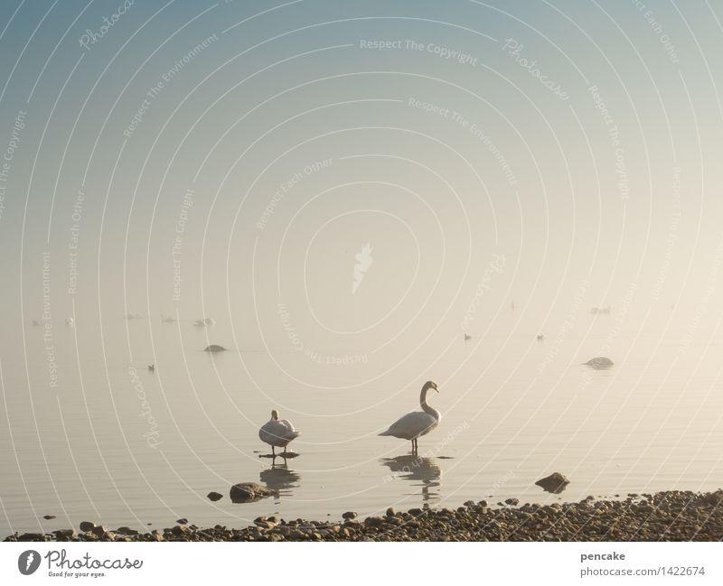 geisterschiffe III Natur Landschaft Urelemente Wasser Himmel Herbst Winter Nebel Seeufer Wildtier Vogel Tiergruppe Tierpaar Schwanensee Ente Bodensee Stein