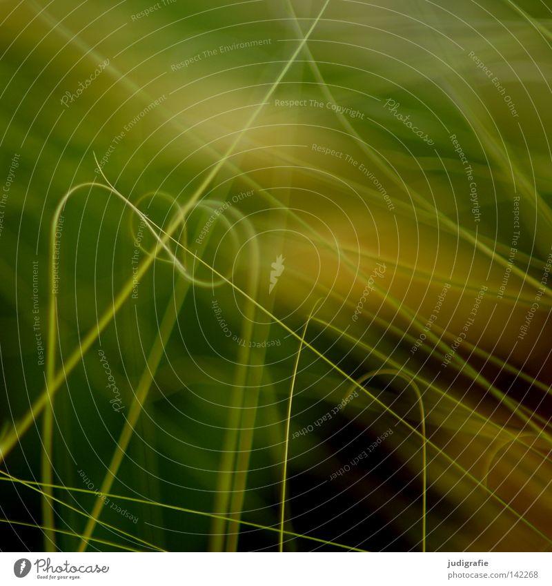 Gras Natur grün Pflanze Sommer gelb Farbe Leben Wiese Gras Umwelt Wachstum nah zart Halm fein durcheinander