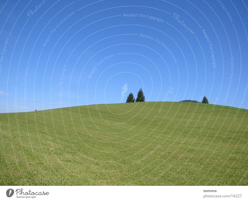 Wiese Natur Himmel Baum Berge u. Gebirge Weide Allgäu