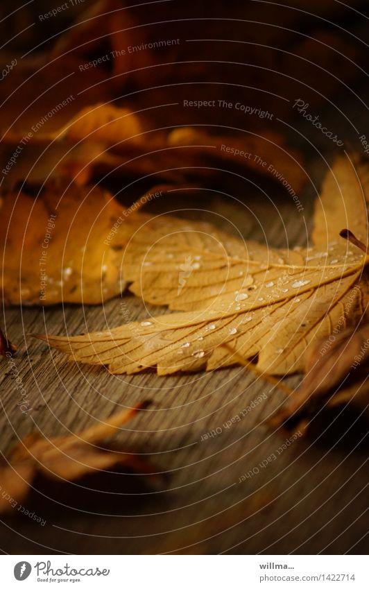 deckblätter | helgiland II Blatt gelb Wärme Herbst braun Holzbrett Tau Ahornblatt