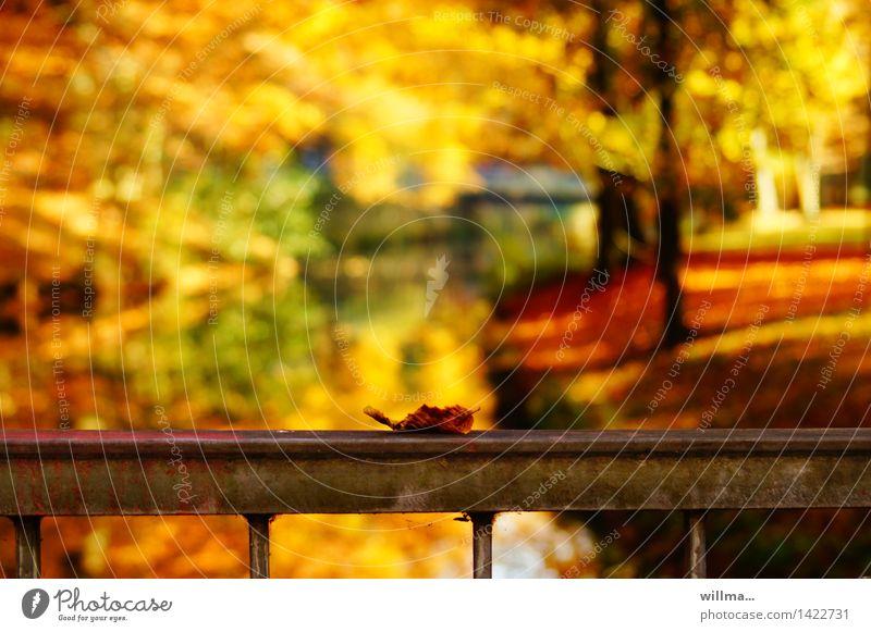 güterslohblatt in acryl | helgiland II Natur grün rot Landschaft Blatt gelb Herbst braun orange Park gold Schönes Wetter Geländer Brückengeländer Herbstlaub