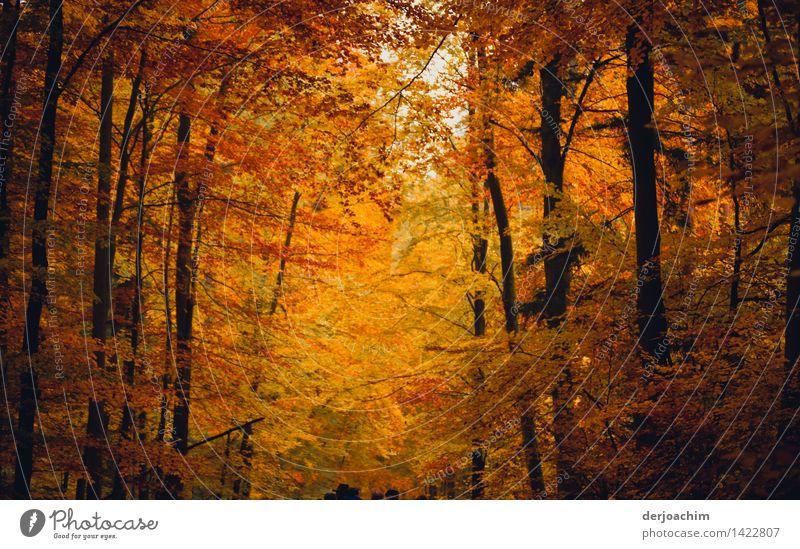 ja wo laufen sie denn Mensch Natur schön Baum Blatt Freude Wald Herbst Holz außergewöhnlich Deutschland leuchten wandern genießen Lächeln Lebensfreude