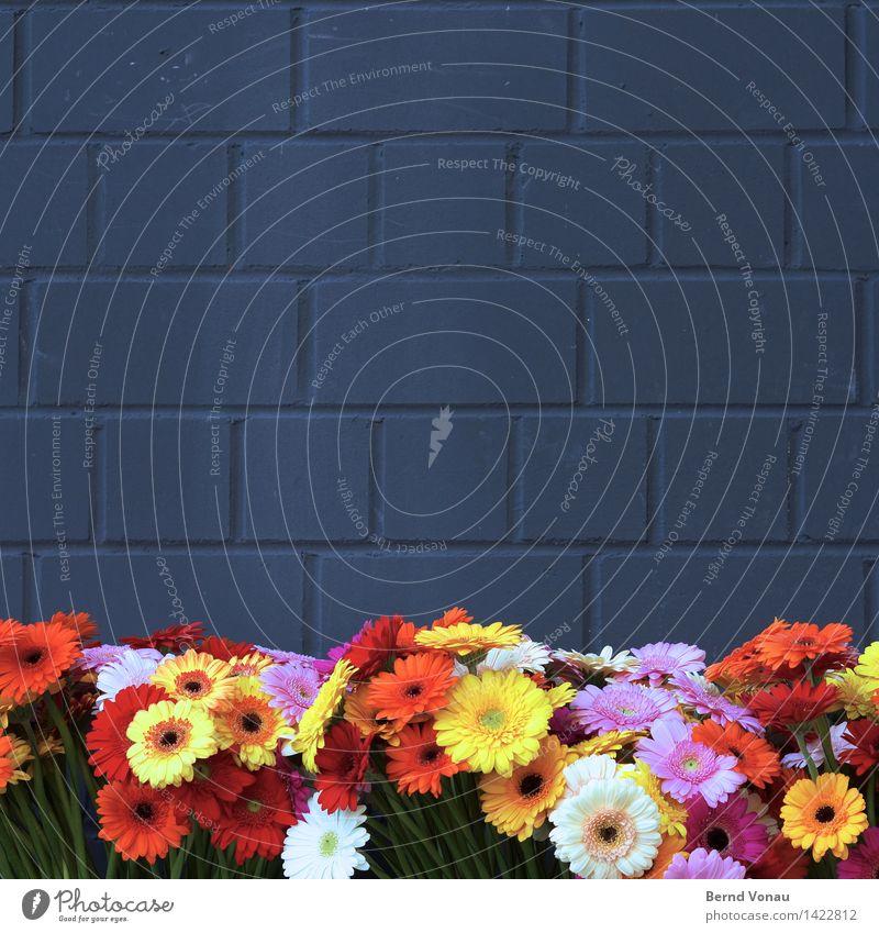 Mauer | Blümchen Blume Kitsch künstlich grau mehrfarbig grell verrückt violett gelb rot grün Kunstblume Stein Steinmauer Barriere Trauer Freude