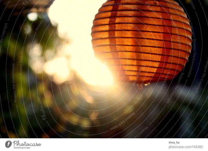 gartenfest II Freizeit & Hobby Sommer Sonne Garten Ball Stern Wärme Japan Asien Zusammensein rund rot Stimmung Farbe Laterne Lichterkette Gartenbau Gartenfest