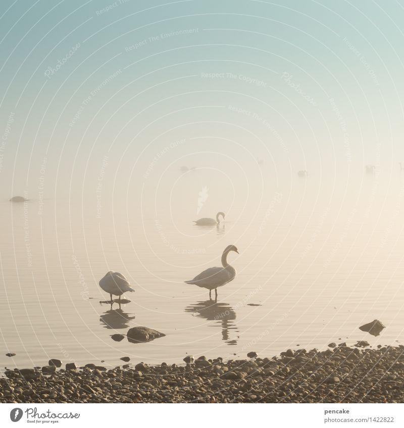 geisterschiffe II Natur Landschaft Urelemente Wasser Himmel Herbst Winter Nebel Seeufer Tier Vogel Tiergruppe Stein Gelassenheit ruhig Schwan Bodensee Küste