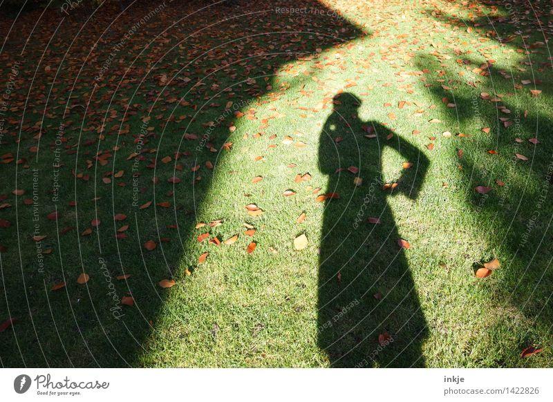 die Denkerin Lifestyle Freizeit & Hobby Junge Frau Jugendliche Erwachsene Leben Körper 1 Mensch Natur Herbst Schönes Wetter Gras Herbstlaub Blatt Garten Park