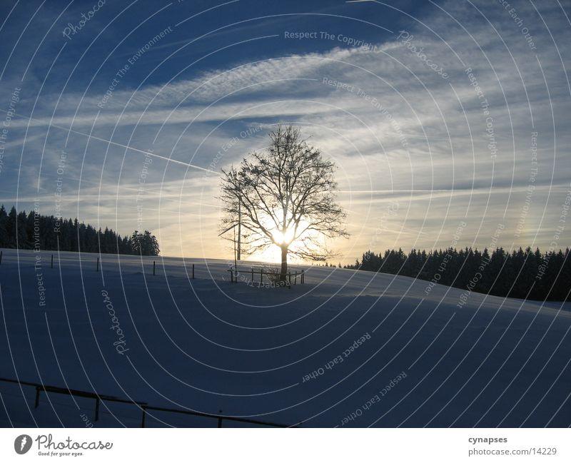 Winterschönheit Baum Sonne Berge u. Gebirge Abendsonne Wintersonne