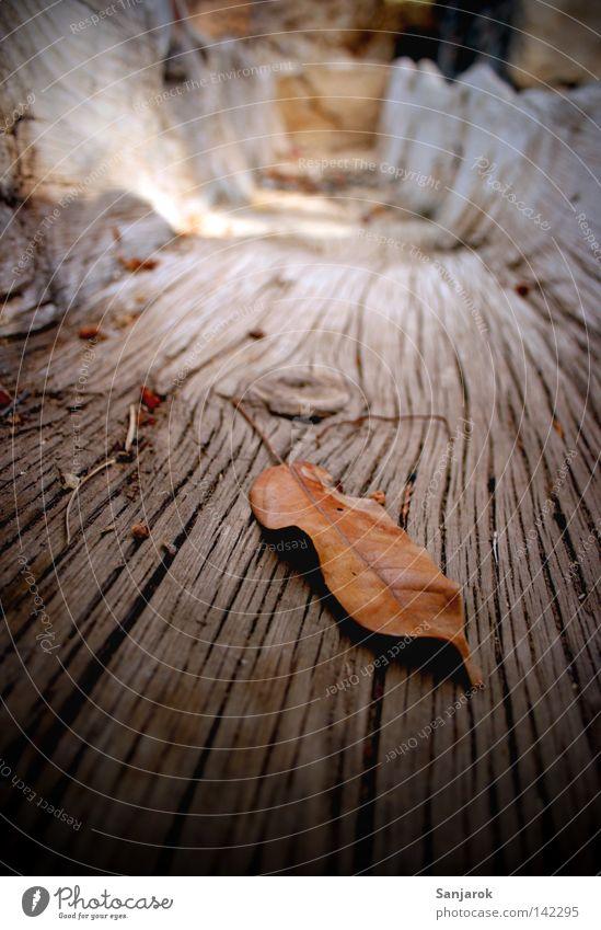 koa Wasser mehr do (gas sin agua) Blatt Holz braun Handwerk trocken Alm getrocknet Kübel Teneriffa Wasserstelle außer Betrieb