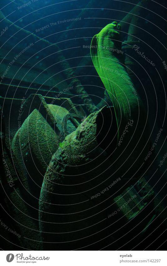 Da ist der Wurm drin !? Wasser alt Meer grün Ferien & Urlaub & Reisen Tier dunkel kalt See Wasserfahrzeug Raum Metall Fisch gefährlich Bodenbelag bedrohlich