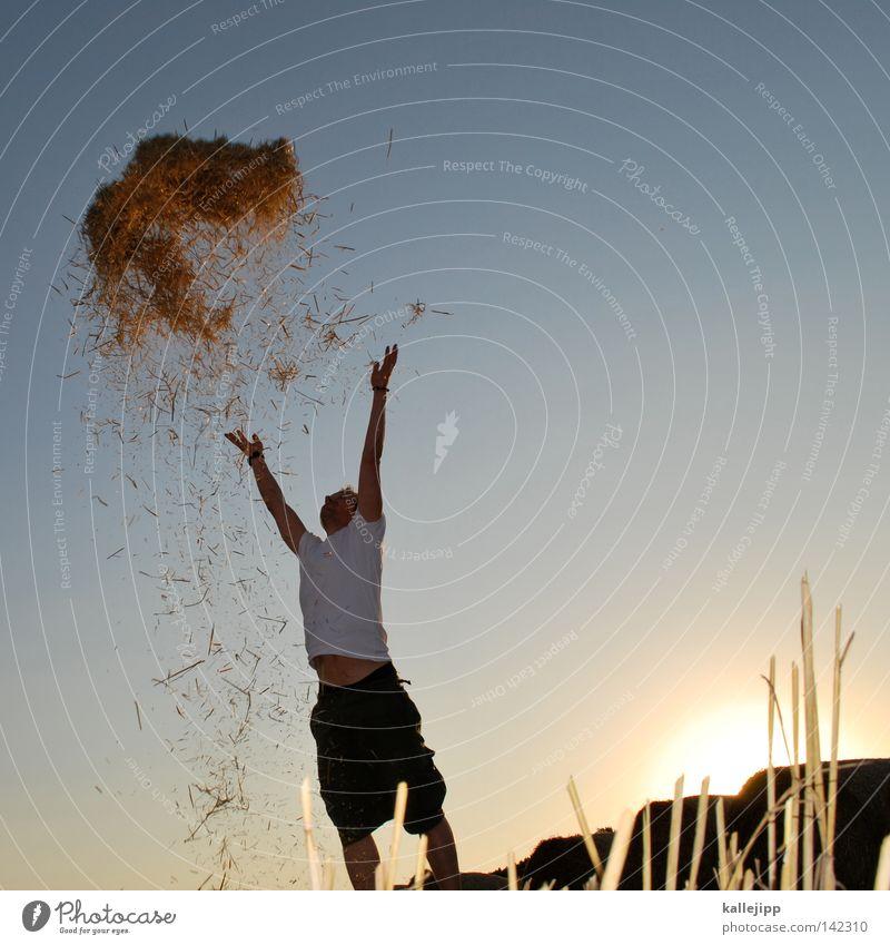 goldrausch Mensch Mann Natur Himmel Sonne blau Sommer Freude ruhig Wolken gelb Ferne Farbe Wiese springen Gras