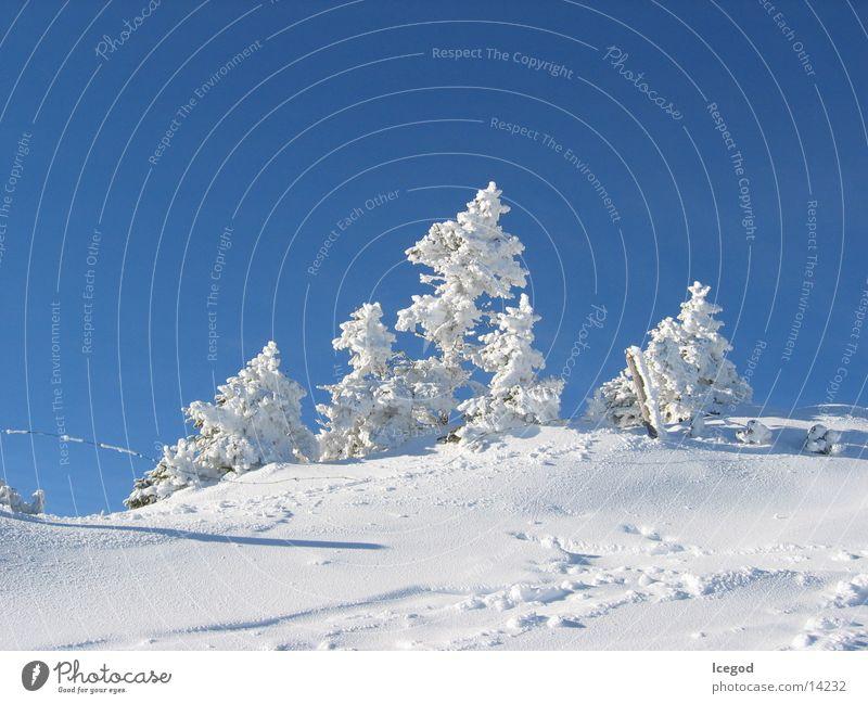 WinterWonderLand 2 Neuschnee Tanne Schnee
