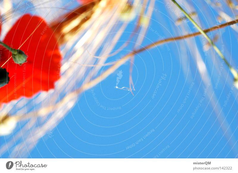 Perspektive: Maulwurf Mohn Mohnfeld Getreidefeld Feld blau Himmel Ähren himmelblau Detailaufnahme Anschnitt rot gelb Instant-Messaging Kornfeld Blick Richtung