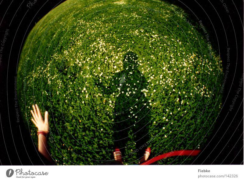 Planet Gänseblümchenwiese Hand weiß Blume grün Pflanze rot Sommer Gras Fuß Schuhe lustig Kugel Schnur Halm Schönes Wetter
