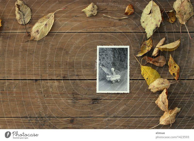 Zeit vergeht Herbst Blatt Sammlung Holz Zeichen Altern alt historisch braun trösten Einsamkeit Senior Design Gefühle geheimnisvoll Identität Kindheit Nostalgie