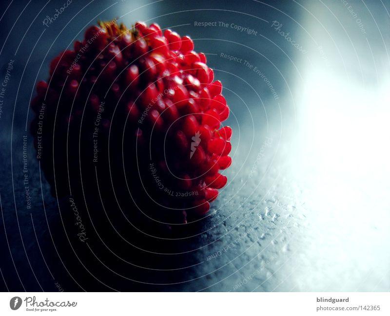 Wilde Walderdbeere Ernährung rot süß dunkel Licht glänzend lecker wildwachsen Natur Pflanze reif Makroaufnahme Nahaufnahme Frucht Vitamin Erdbeeren