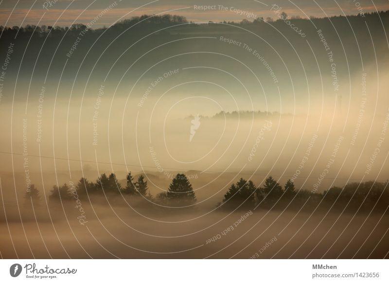 Nichts davor und nichts dahinter Natur Baum Einsamkeit Landschaft ruhig Ferne kalt Herbst grau Feld Nebel trist wandern Sträucher nass Romantik