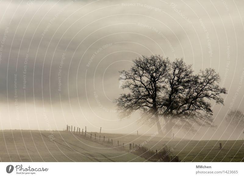 November Ferien & Urlaub & Reisen Tourismus Ausflug Natur Landschaft Herbst Wetter schlechtes Wetter Nebel Baum Feld träumen warten dunkel grau Gefühle trösten