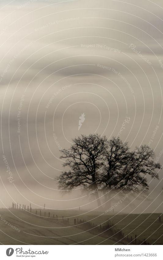 Farbfoto wandern Natur Herbst Nebel Baum Feld dunkel trist grau Gelassenheit geduldig ruhig Hoffnung Glaube träumen Traurigkeit Sehnsucht Heimweh Fernweh