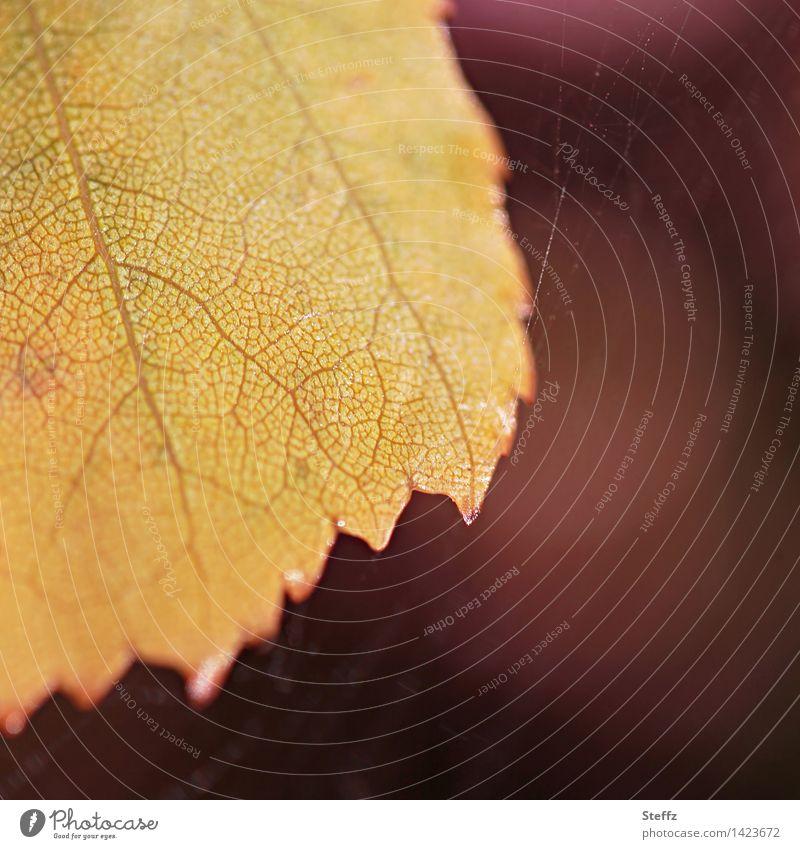 goldenes Blatt Herbstblatt Herbstlaub goldener Oktober herbstliche Impression vergänglich warme Herbstfarben Herbststimmung Vergänglichkeit Blattadern