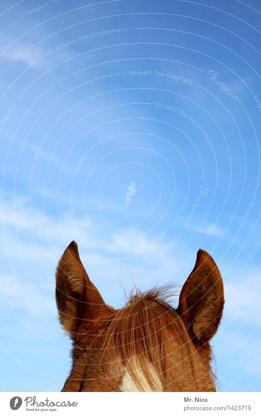 pony Himmel braun Freizeit & Hobby Spitze Pferd Ohr Fell hören Wachsamkeit tierisch Ponys Reiten Pferdekopf Fellfarbe