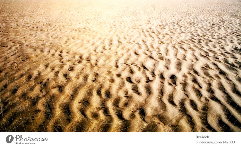 going home Sand Küste Wasser Meer Sahara Wüste trocken Spuren Fußspur Ordnung Linie Schlangenlinie Ödland Verdunstung vertrocknet Stranddüne Erde Boden