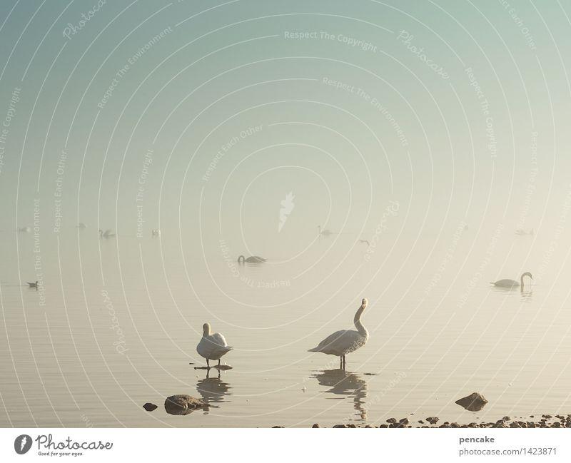 !trash! 2015 | herumgeistern Natur Urelemente Wasser Herbst Winter Nebel Seeufer Tier Wildtier Tiergruppe Zeichen außergewöhnlich Schwan Entenvögel Bodensee