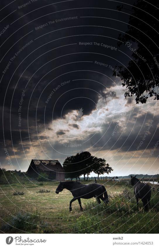 Pferdekur Umwelt Natur Landschaft Pflanze Tier Gewitterwolken Horizont Klima Wetter Schönes Wetter Baum Gras Sträucher Weide Ruine Scheune Nutztier 2 Erholung